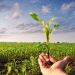 CCNL Cooperative e Consorzi Agricoli