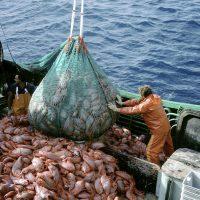 Fermo Pesca Obbligatorio